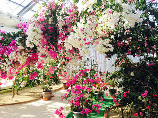 花の写真・画像素材[450607]