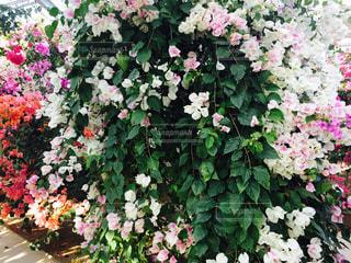 花の写真・画像素材[450610]