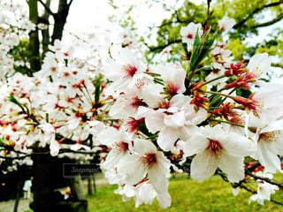 花の写真・画像素材[450840]