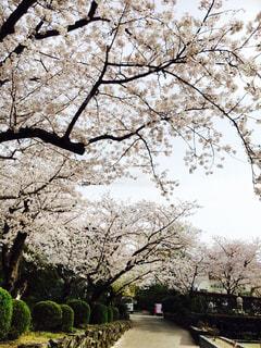 花の写真・画像素材[450849]