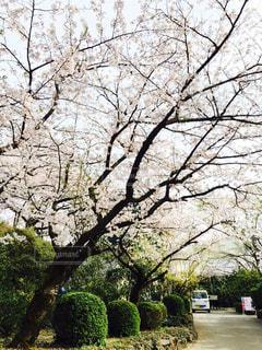 花の写真・画像素材[450850]