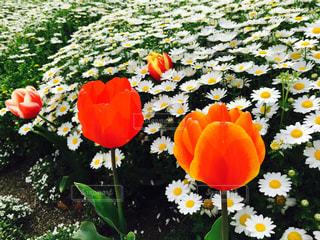 花の写真・画像素材[450880]