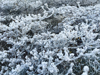 冬の写真・画像素材[450881]