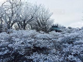 冬の写真・画像素材[450882]