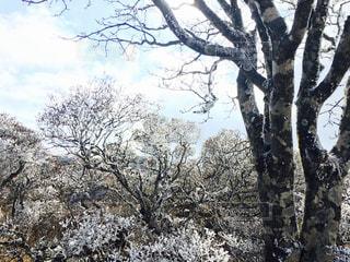 冬の写真・画像素材[450885]