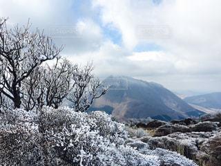 冬の写真・画像素材[450888]