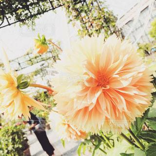 花の写真・画像素材[450930]