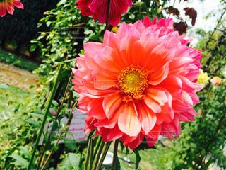 花の写真・画像素材[450931]