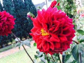 花の写真・画像素材[450932]
