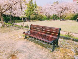 春のベンチの写真・画像素材[2022782]