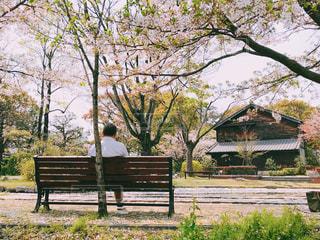 桜を見ながら休憩する男性の写真・画像素材[2022785]
