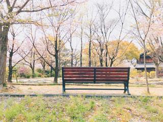 春のベンチの写真・画像素材[2022793]