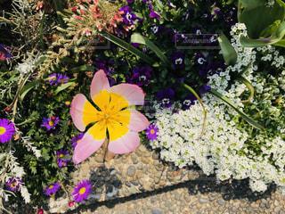 花の写真・画像素材[2022871]