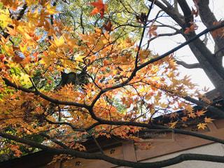 木の近くでの写真・画像素材[2798002]