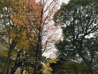 大きな木の写真・画像素材[2798008]