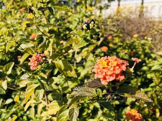 花畑のクローズアップの写真・画像素材[2798017]