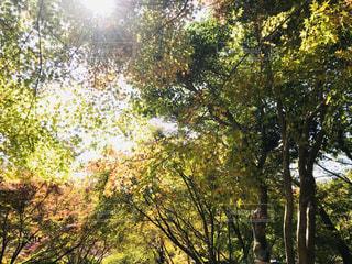 森の中の木の写真・画像素材[2798021]