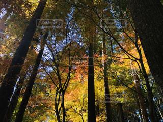 森の中の木の写真・画像素材[2798020]