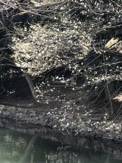 三ツ池公園の写真・画像素材[450495]