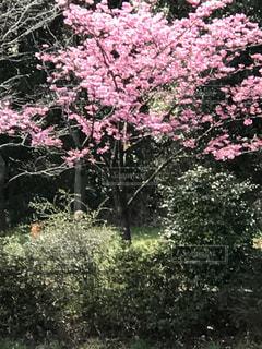 三ツ池公園の写真・画像素材[450496]