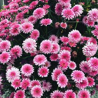 花の写真・画像素材[450500]