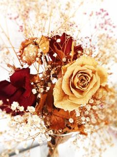 花の写真・画像素材[511020]