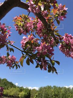 木の花の花瓶の写真・画像素材[1306654]