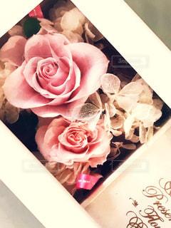 近くの花のアップの写真・画像素材[1312819]