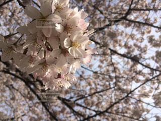 自然の写真・画像素材[450295]