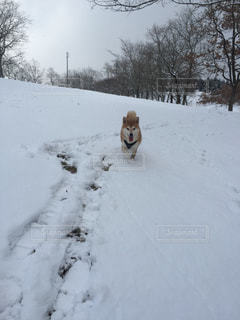 No.450320 雪
