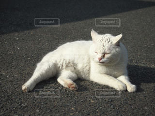 猫 - No.450323