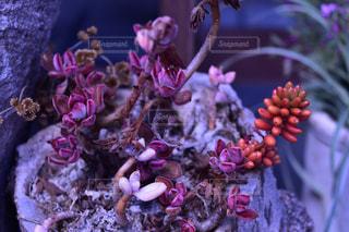 No.451647 植物