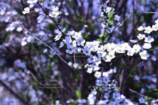 白い花 - No.451839