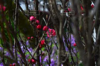 植物 - No.453531