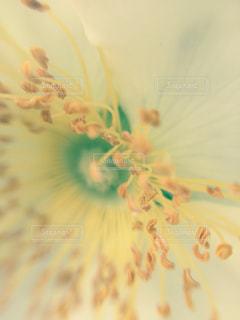 自然の写真・画像素材[455623]