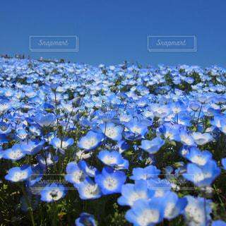 お花畑の写真・画像素材[451102]