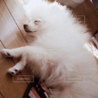 犬 - No.451178