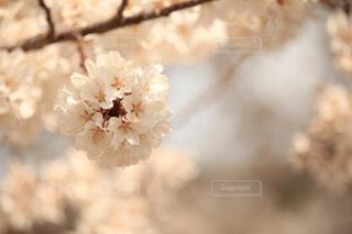 No.455009 春
