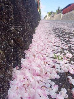 花の写真・画像素材[452440]