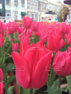 花の写真・画像素材[453548]
