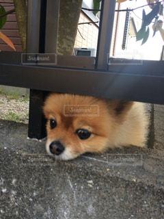 犬の写真・画像素材[464321]