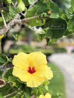 植物のクローズアップの写真・画像素材[2299189]