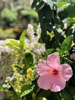 花のクローズアップの写真・画像素材[2299234]