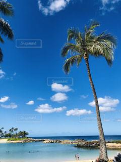 水域の隣にあるヤシの木の群しの写真・画像素材[2299487]
