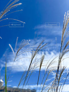 自然の写真・画像素材[2644487]