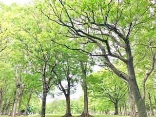公園と樹木の写真・画像素材[3583786]