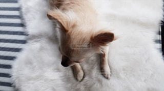 犬の写真・画像素材[452784]