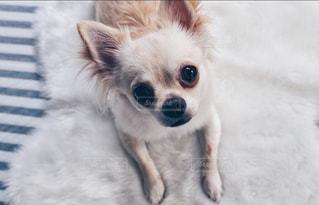 犬の写真・画像素材[452785]