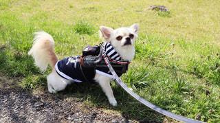 犬の写真・画像素材[462641]
