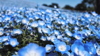 花の写真・画像素材[491269]